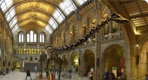 history-highlightsGeologicalMuseum